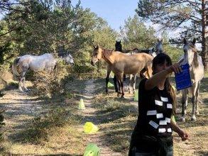 Bases del Coaching asistido con caballos en libertad.