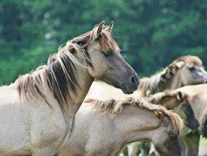 Etología equina. El caballo en estado salvaje . PROXIMAMENTE